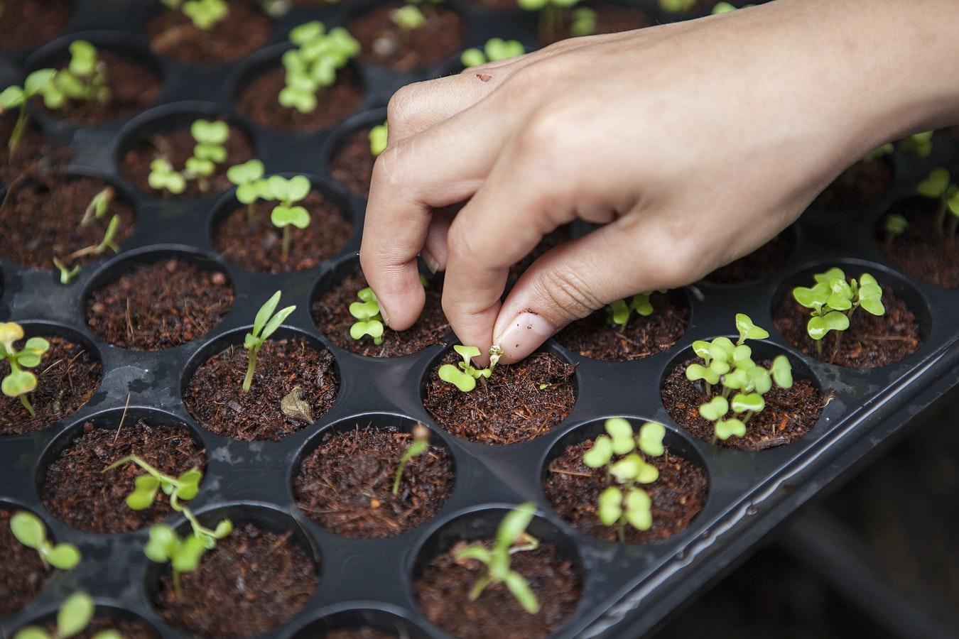 free range seedlings